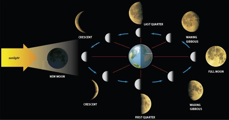 Il cielo del mese  FasiLunari