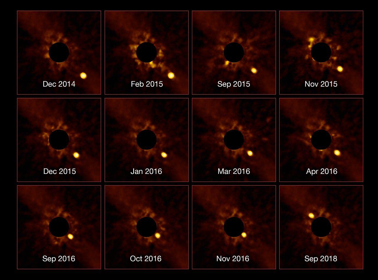Il moto di beta Pictoris b nel disco della stella madre. Crediti ESO/VLT